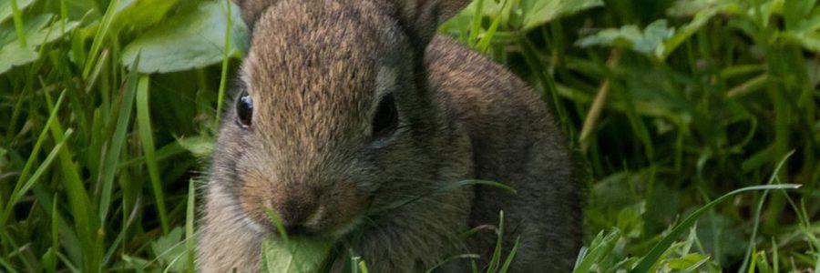 Scheda Coniglio Alimentazione