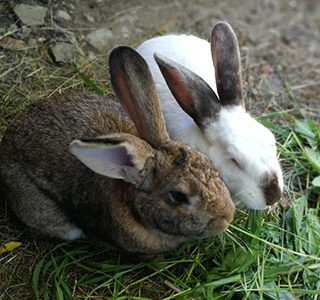 Rosemary e Marchino