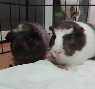 Camilla e Margherita